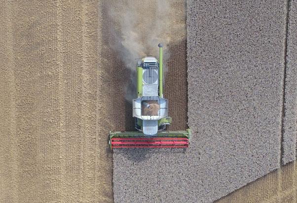 Crop harvesting robots